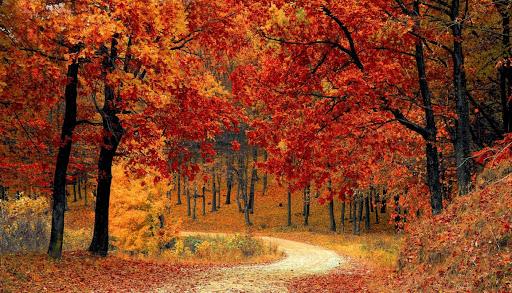 foglie memorial messa